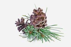 Plan rapproché de pin de Noël Photo stock