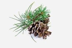 Plan rapproché de pin de Noël images stock