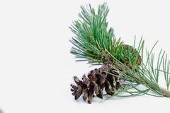 Plan rapproché de pin de Noël Photo libre de droits
