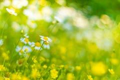 Plan rapproché de pissenlit sur le fond naturel sous la lumière du soleil Concept inspiré de nature images stock