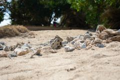 Plan rapproch? de plage sablonneuse brune jaune avec des coraux dans le premier plan et des arbres verts ? l'arri?re-plan photographie stock libre de droits