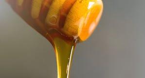 Plan rapproché de plongeur de miel Égoutture de miel d'une louche en bois Photos libres de droits