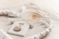 Plan rapproché de plume de paon, dentelle blanche Photographie stock