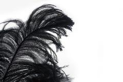 Plan rapproché de plume noire d'isolement Images stock