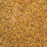 Plan rapproché de pollen photos libres de droits