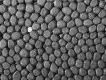 Plan rapproché de polystyrène Photos stock