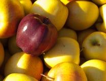 Plan rapproché de pommes Images libres de droits