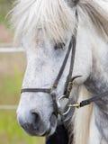 Plan rapproché de portrait de cheval Photos stock