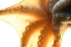 Plan rapproché de poulpe Images libres de droits