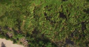 Plan rapproché de ressac de mer Étayez avec l'eau de mer et les grandes roches couvertes d'algues banque de vidéos