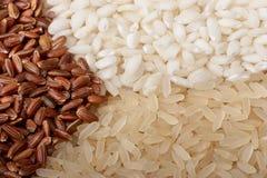 Plan rapproché de riz (instruction-macro, trois couleurs) Image stock