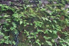 Plan rapproché de roche couvert de la mousse et de fougères Photo libre de droits