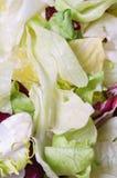 Plan rapproché de salade photos libres de droits