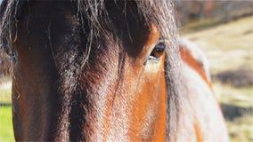 Plan rapproché de tête de cheval clips vidéos