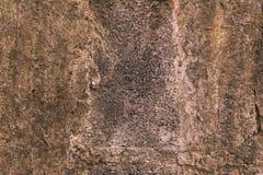 Plan rapproché de texture de plancher de ciment Photos stock