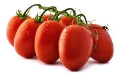 Plan rapproché de tomates de Piccadilly Photo libre de droits