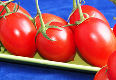 Plan rapproché de tomates sur le bleu Images libres de droits