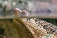 Plan rapproché de tortue dans le zoo image libre de droits