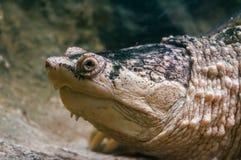 Plan rapproché de tortue dans le zoo photos stock