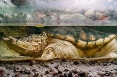 Plan rapproché de tortue dans le zoo photos libres de droits