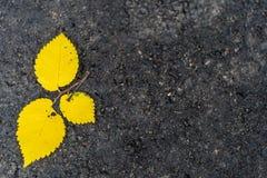 Plan rapproché de trois Aspen Leaves Isolated ordinaire jaune sur le fond d'herbe verte, fond abstrait photo stock