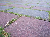 Plan rapproché de trottoir avec l'herbe Image stock