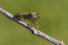 Plan rapproché de véritable insecte Images libres de droits