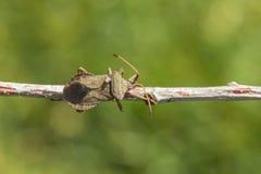 Plan rapproché de véritable insecte Image stock