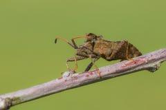 Plan rapproché de véritable insecte Photographie stock