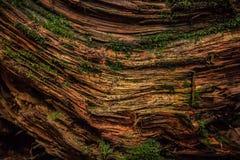 Plan rapproché de vieille texture putréfiée d'arbre Images stock