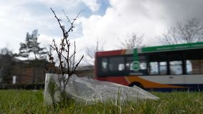 Plan rapproché de vue de jour de la jeune pousse d'arbre polluée et couverte de paix des déchets de plastique à côté de la route  images libres de droits