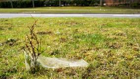 Plan rapproché de vue de jour de la jeune pousse d'arbre polluée et couverte de paix des déchets de plastique à côté de la route  photos libres de droits