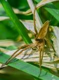 Plan rapproché de Web spider de crèche photographie stock libre de droits