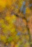 Plan rapproché de Web sur la forêt photos stock