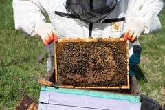 Plan rapproché des abeilles sur le nid d'abeilles dans le rucher Photos stock