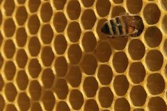 Plan rapproché des abeilles sur le nid d'abeilles dans le rucher Photo libre de droits
