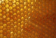 Plan rapproché des abeilles sur le nid d'abeilles dans le rucher Images libres de droits