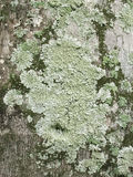 Plan rapproché des algues, de la mousse et du lichen s'élevant sur le tronc d'arbre Photos stock