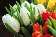 Plan rapproché des bouquets des tulipes colorées, rouge, jaune, blanc à b Photographie stock libre de droits