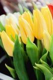 Plan rapproché des bouquets des tulipes colorées, rouge, jaune, blanc à b Images stock