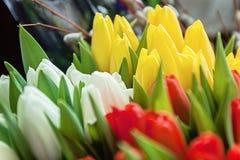 Plan rapproché des bouquets des tulipes colorées, rouge, jaune, blanc à b Photographie stock