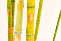 Plan rapproché des branches d'arbre en bambou avec le fond blanc images libres de droits