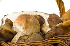 Plan rapproché des champignons de couche dans le panier Photographie stock libre de droits