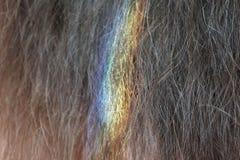Plan rapproché des cheveux bruns naturels colorés par l'arc-en-ciel photos libres de droits