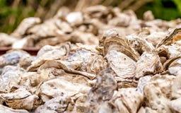 Plan rapproché des coquilles d'huître pour le wagon-restaurant photographie stock