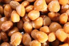Plan rapproché des fèves de mung Image libre de droits