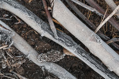 Plan rapproché des feuilles et de l'herbe sèches avec la gelée Images libres de droits