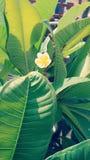 Plan rapproché des fleurs Photographie stock