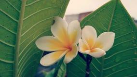 Plan rapproché des fleurs Image libre de droits