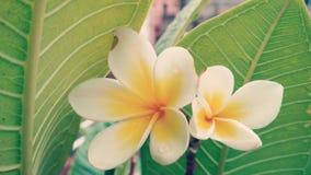 Plan rapproché des fleurs photos stock